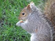 灰色的小松鼠图片_15张