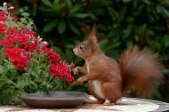 可爱的小松鼠图片_10张