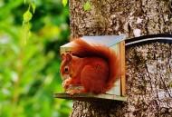 可爱的小松鼠高清图片_14张