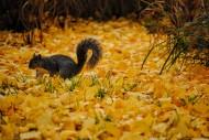 娇小可爱的松鼠图片_12张