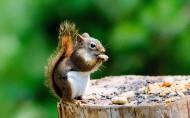 可爱的松鼠图片_30张