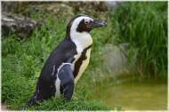 企鹅图片_15张