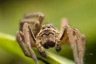 微距蜘蛛图片_6张