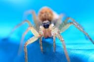 蜘蛛微距圖片_10張