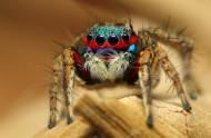 色彩斑斕的蜘蛛圖片_11張