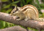 可爱的松鼠图片_14张