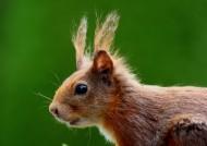可爱的小松鼠图片_14张