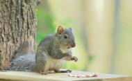 活泼的小松鼠图片_15张