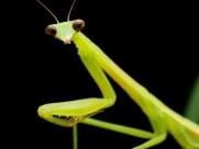 螳螂图片_10张
