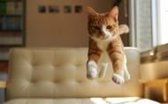 可爱的动物跳跃图片_19张