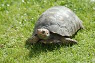 匍匐的乌龟图片_12张
