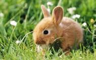 可愛的棕色兔子圖片_20張