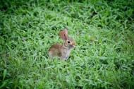 心爱的兔子图片_10张