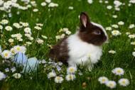 可愛的兔子圖片_10張