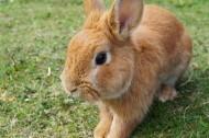 可爱呆萌的兔子图片_13张