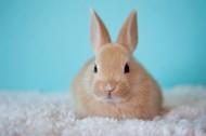 软萌可爱的兔子图片_15张