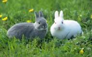 可愛兔子圖片_20張