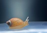 爬行的蜗牛高清特写图片_8张
