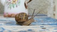 蜗牛高清图片_13张