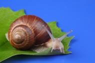 蜗牛超清图片_8张