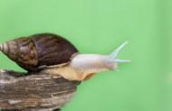 蜗牛图片_6张