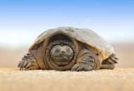 乌龟高清图片_12张