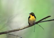 夏季树枝上的鸟图片_48张