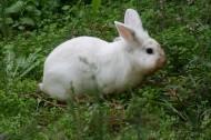 可爱的小白兔图片_12张