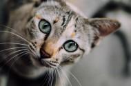 睁大双眼的小猫图片_11张