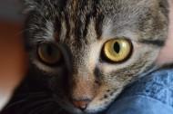 睁大双眼的小猫图片_14张