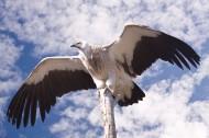 犀利的老鷹寫真圖片_15張
