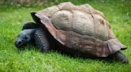 行动迟缓的乌龟图片_12张