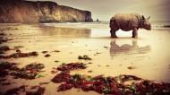 强壮的犀牛图片_8张