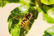 辛勤的蜜蜂图片_8张