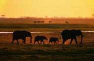 夕陽大象剪影圖片_6張