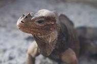 蜥蜴高清圖片_12張