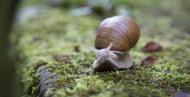 药用价值较高的蜗牛图片_17张