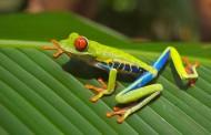 叶子上的青蛙图片_10张