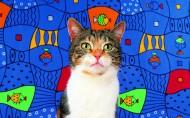 艺术猫咪图片_25张