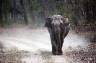 一頭行走的大象圖片_9張