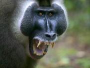 人猿、猩猩、猴子图片_20张