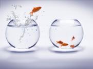鱼缸中的金鱼图片_13张