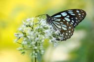 枝头的蝴蝶图片_12张