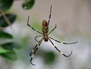 彩色蜘蛛图片_13张