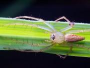 微距蜘蛛图片_15张