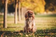 坐着的狗狗图片_14张