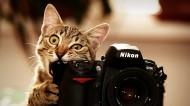 尼康照相机图片_17张