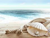 沙滩上的贝壳图片_21张