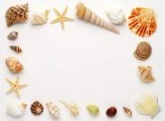 貝殼和海螺圖片_47張