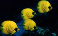 海底世界圖片_20張